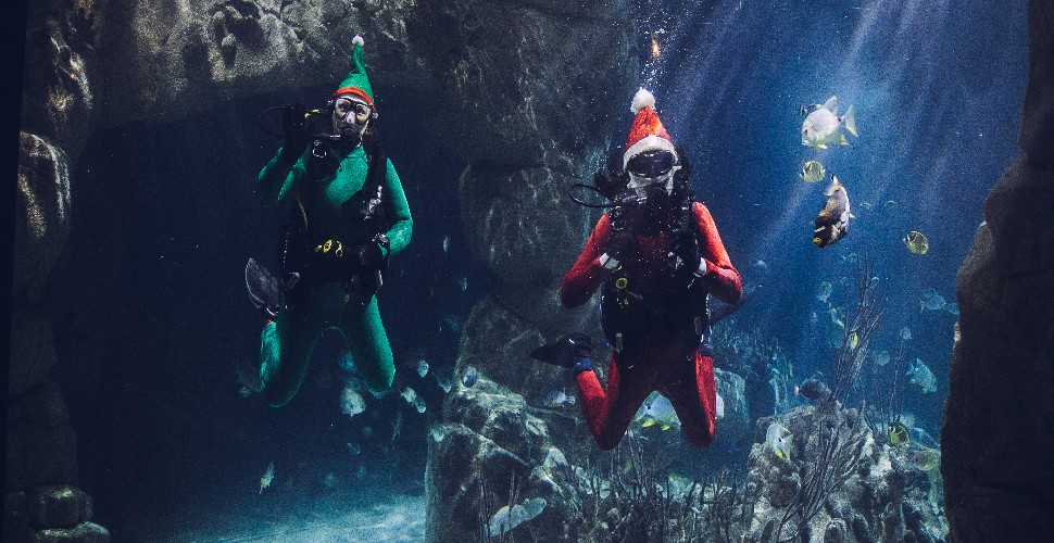 Scuba diving elf and Santa in the tank at the National Marine Aquarium