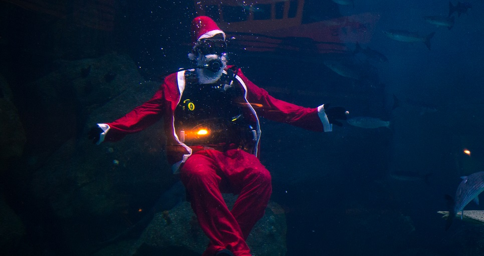 Gearing up for a Christmas to remember with the National Marine Aquarium