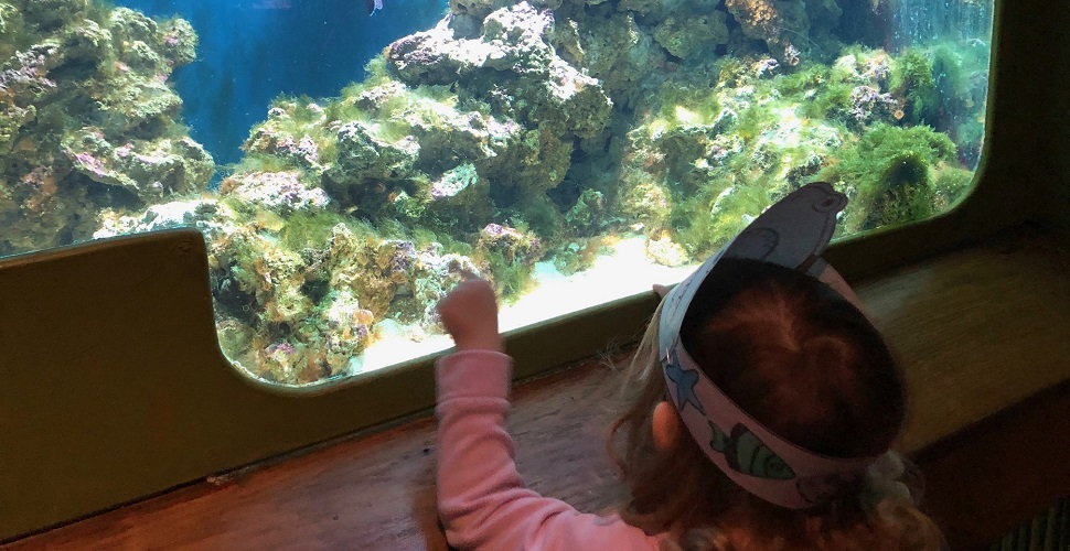 Rachel Bustin: Family trip to the National Marine Aquarium