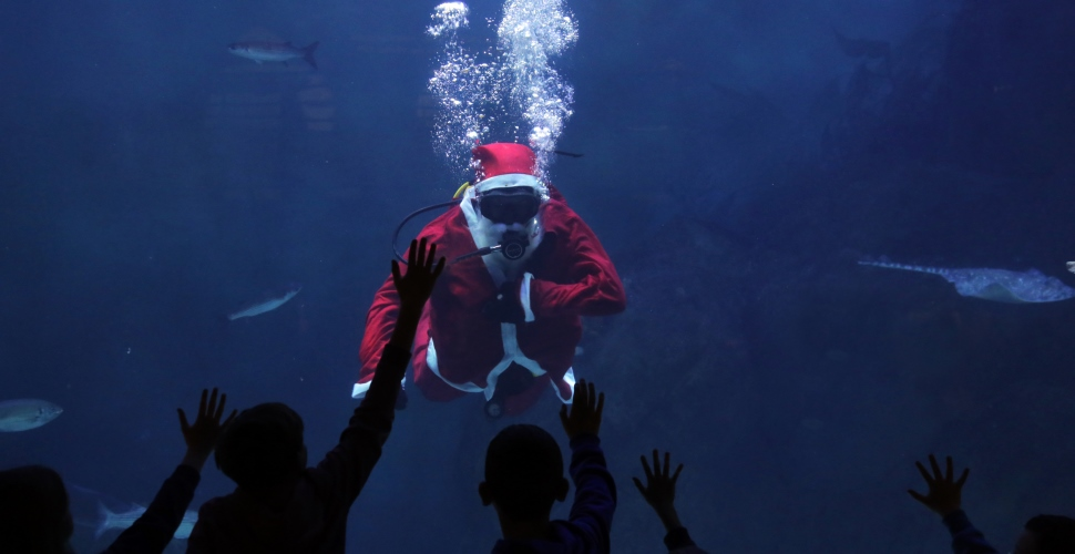 Don't be blue this festive season, the National Marine Aquarium has got you covered!