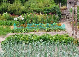 Fantastic and positive results of Allotments
