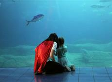 Splash into summer at the National Marine Aquarium