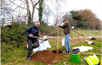Orchard Planting at Poole Farm
