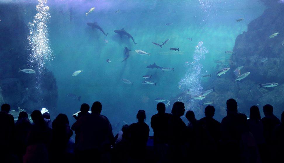 NationalMarine Aquarium